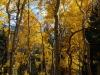 landscape_autumn_02
